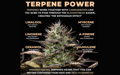 What Are Terpenes in cannabis?