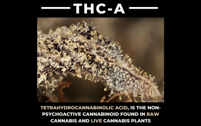 What Is The Difference Between THCA & THC